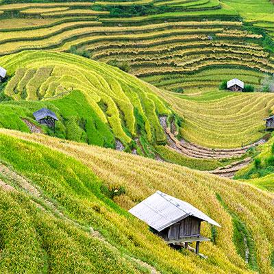 Lào Cai, une des régions du thé au Vietnam