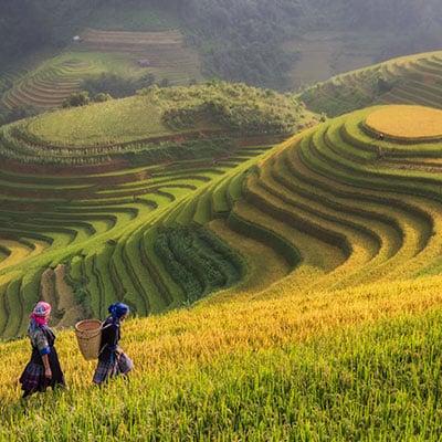 Région de thé au Vietnam Yên Bái