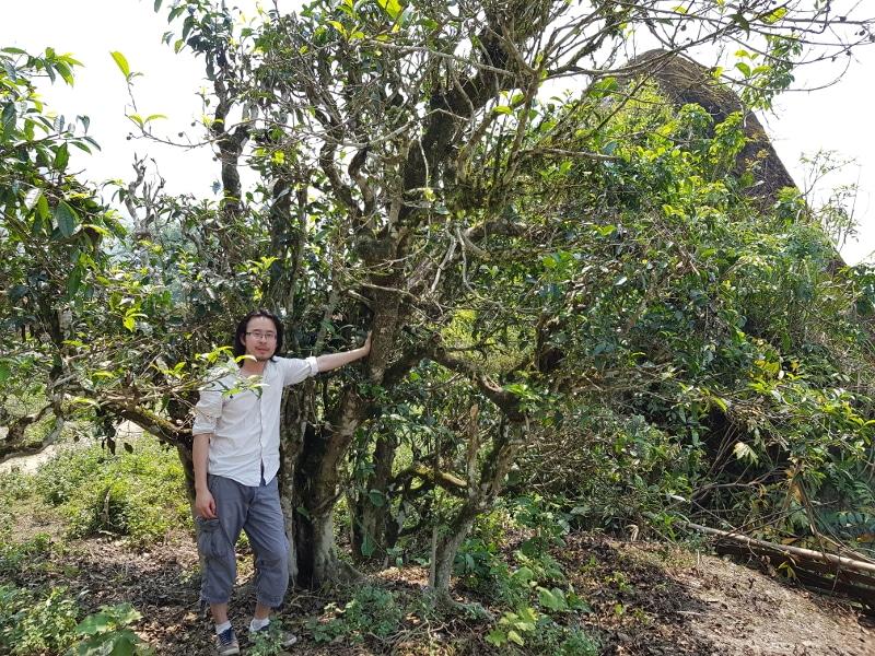 Dans les montagnes de Hà Giang auprès des Dào et de leurs théiers sauvages centenaires.