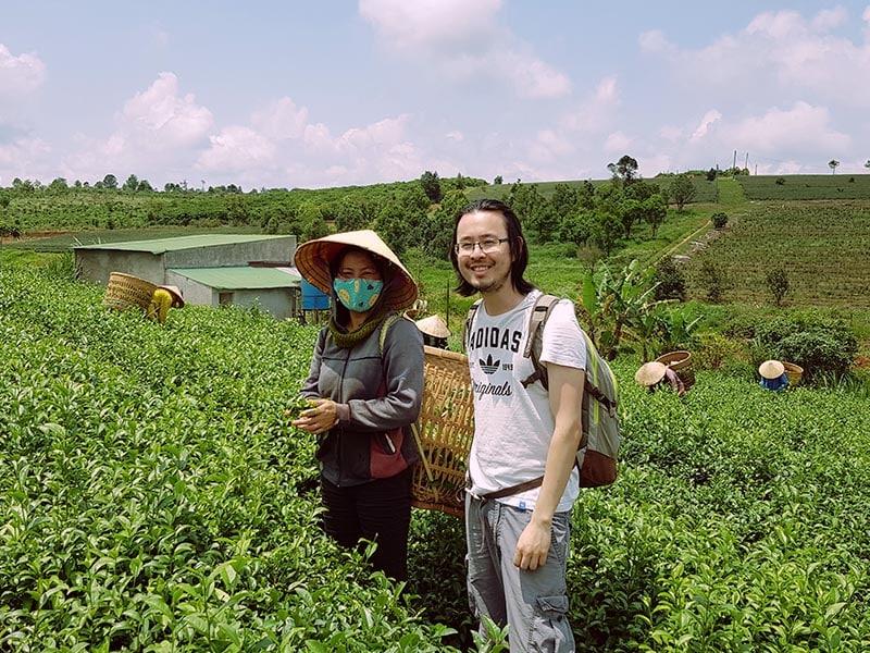 Récolte de thé de printemps du Vietnam